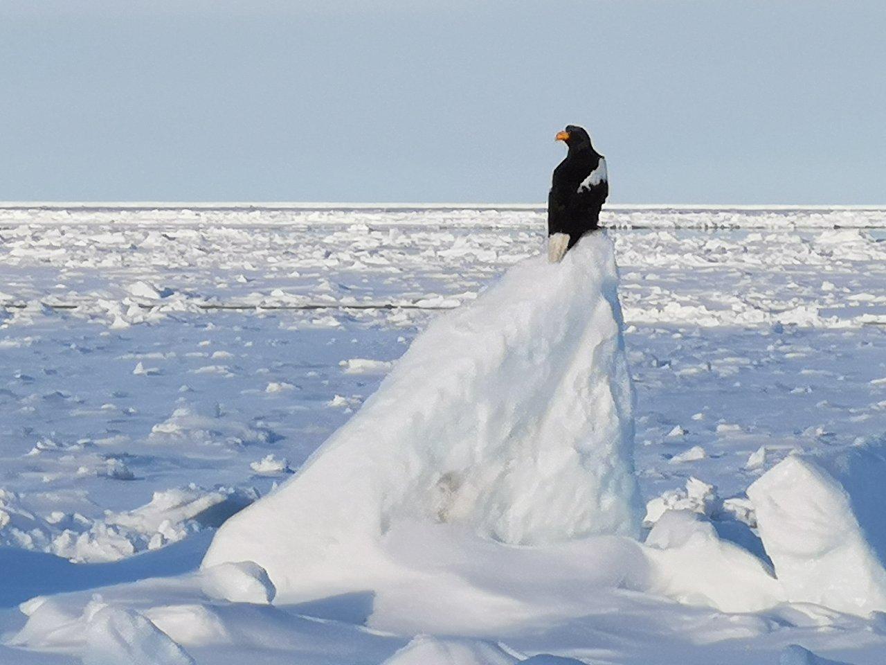 Drift ice observation